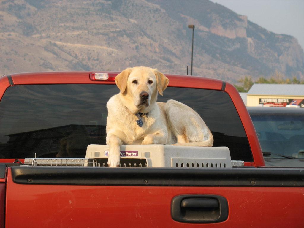 Hund mit Box auf der Laderampe des Autos