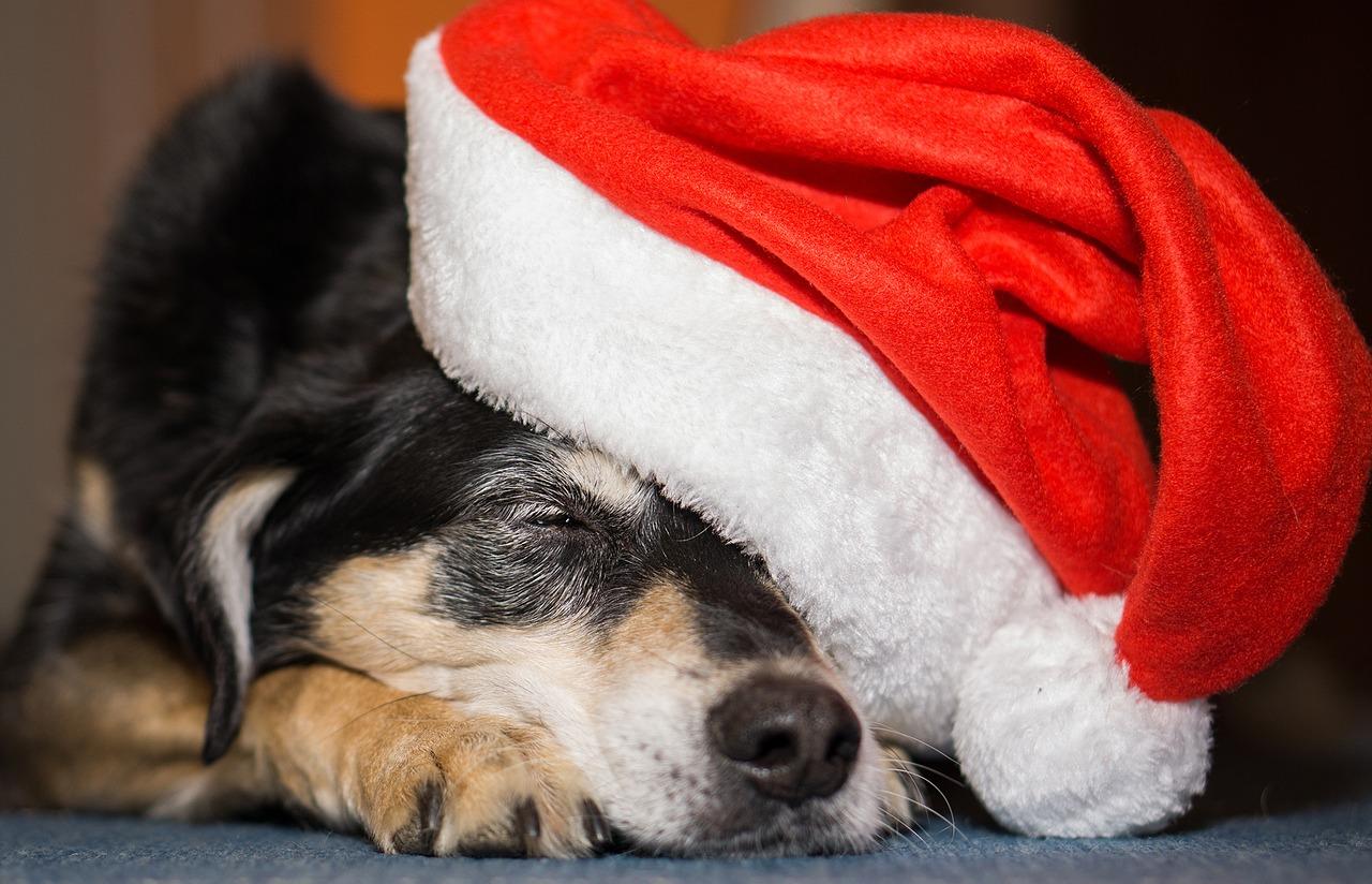 Rezension: Ein Hund unterm Weihnachtsbaum - Elli H. Radinger