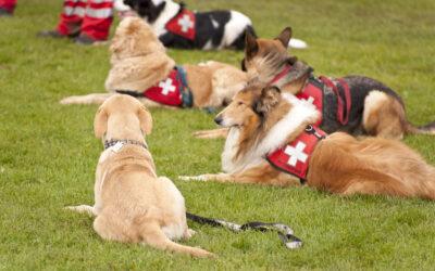 Wissen Wolf: Mit Hunden im Wolfsgebiet arbeiten