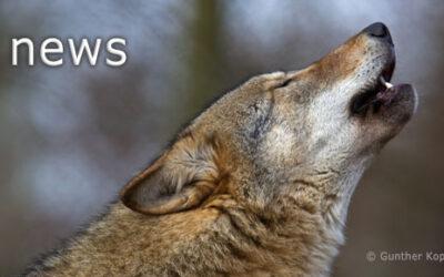 Neue Studie zeigt geeignete Lebensräume für Wölfe